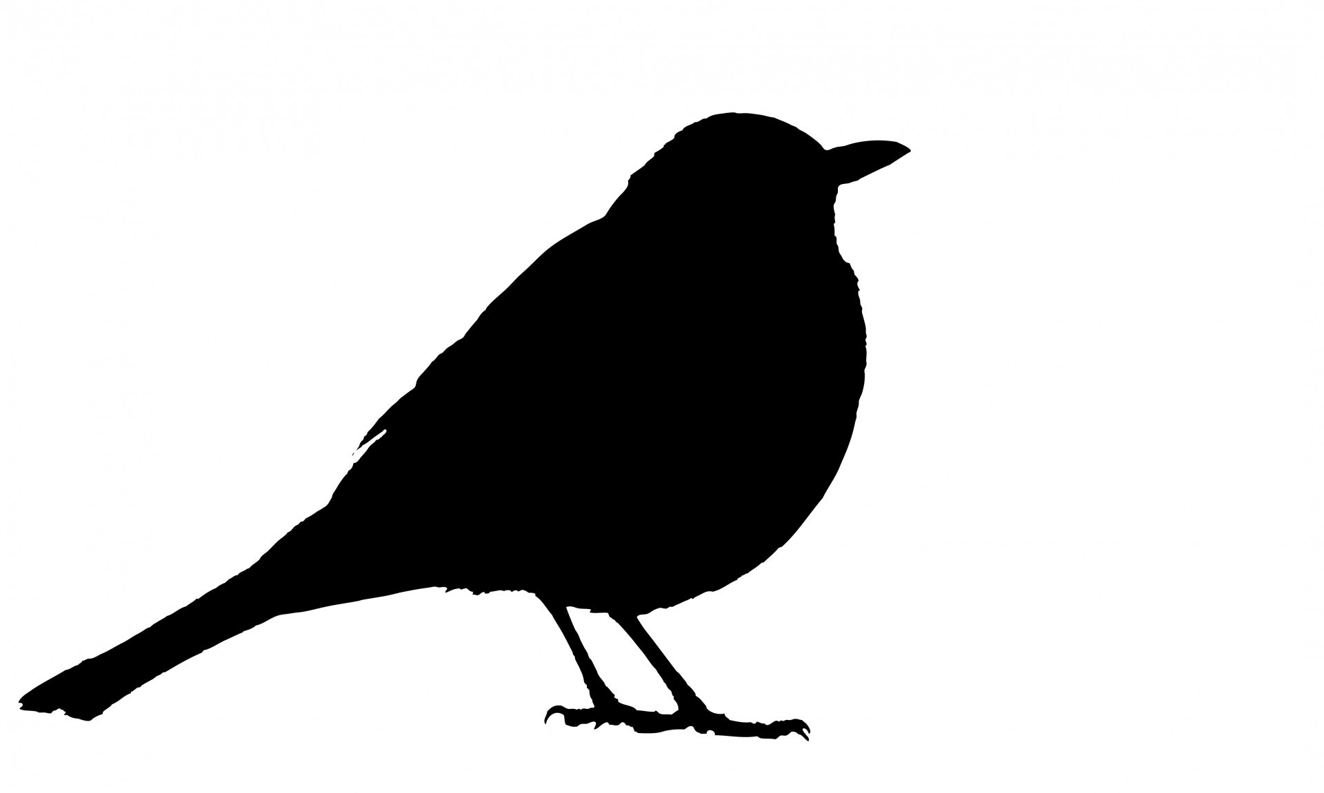 blackbird-silhouette-1496655320N1W-1